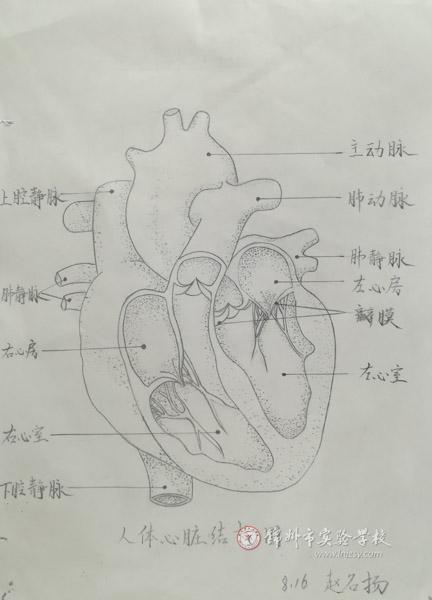 锦州市实验学校-实验校初中生生物绘图大赛精彩纷呈