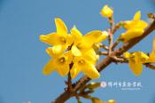 春色迷人(组图)